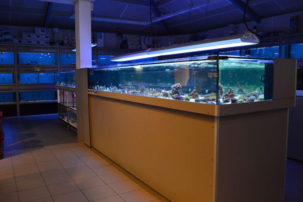 Renovatie zeewaterafdeling!