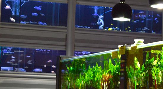 aquariums_verkoop