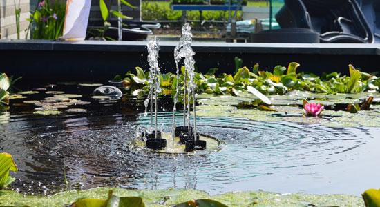 Vijvers verloop aquariums vijvers for Luchtpomp vijver te koop