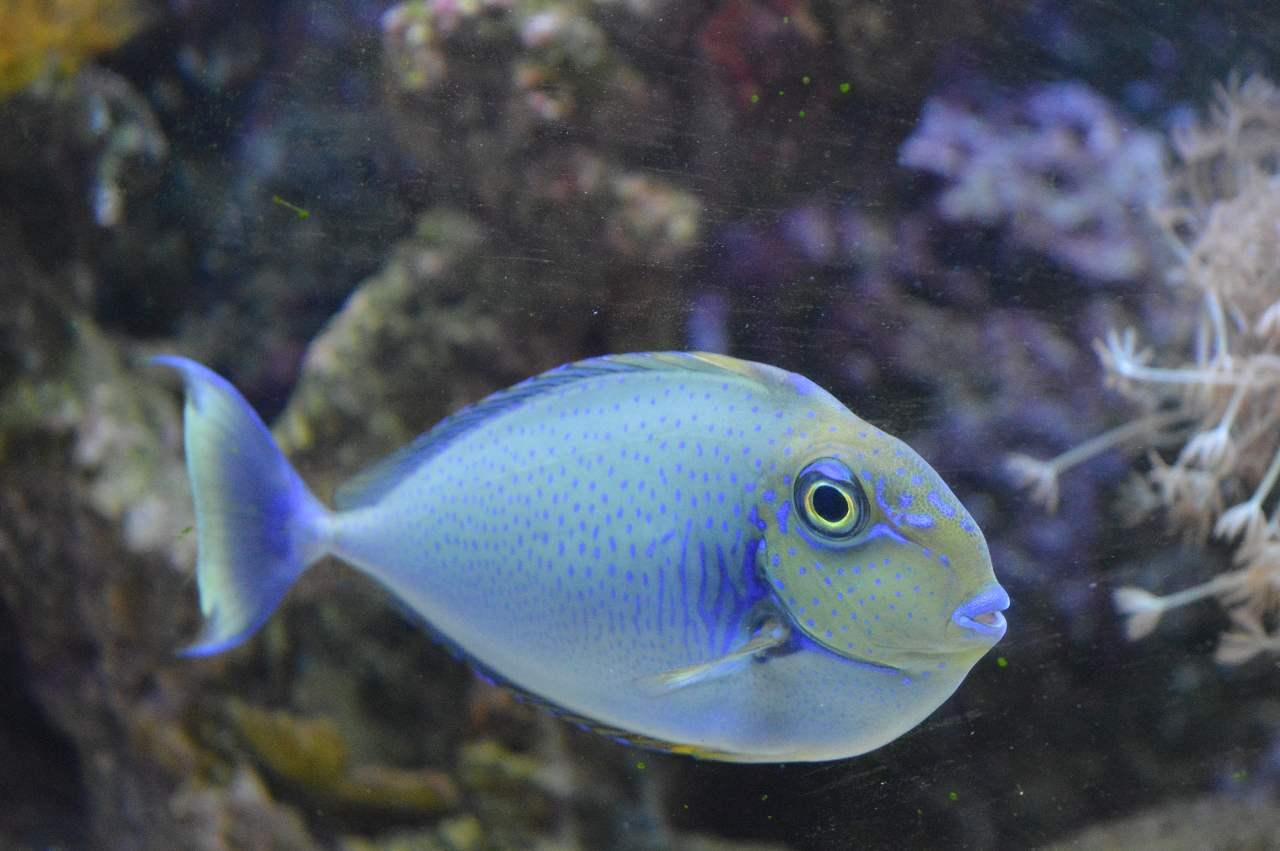 Alle zeewatervissen