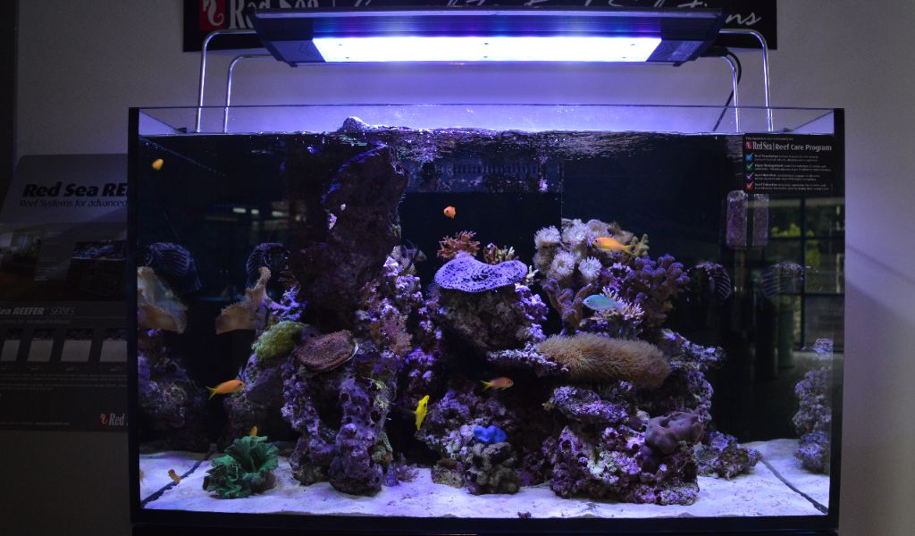 verlichting zeewater
