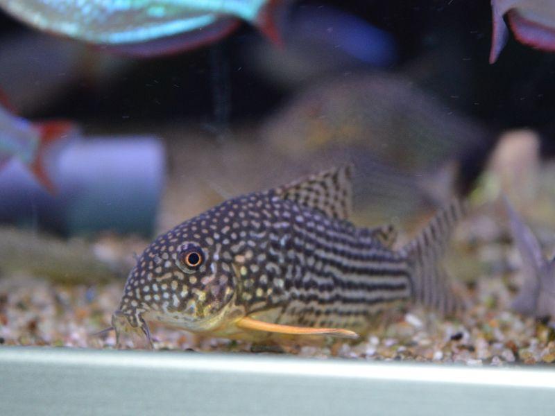 Voeding bodemvissen