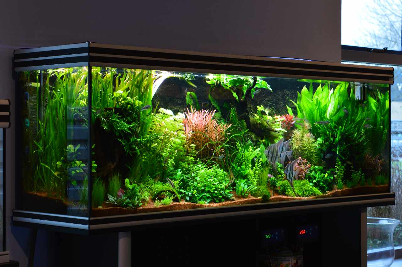 Aquariums   Verloop Aquariums   Vijvers