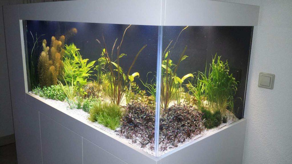 Aquariums bezorgen inrichten onderhouden verloop for Filter vijver schoonmaken