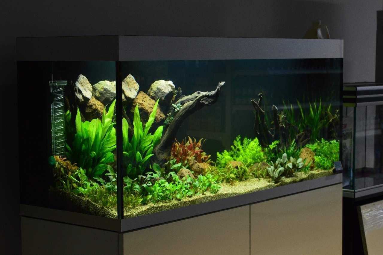Aquariums zoetwater verloop aquariums vijvers for Aquarium einrichtungsideen