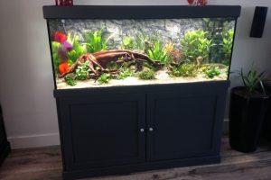 Frager aquarium